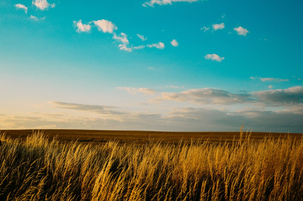 agriculture-countryside-field-7976