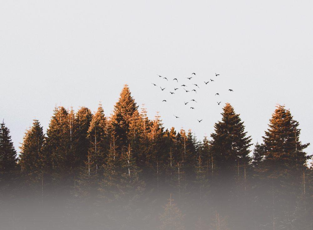 birds-cold-conifer-917494
